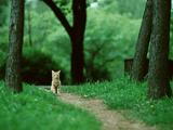 cat_dxt1_quarter