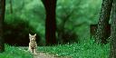 cat_512-256_quater-NearestNeighbor