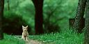 cat_pvrtc4bpp_512-256_quater-NearestNeighbor