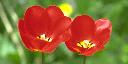 flower_512-256_quater-NearestNeighbor