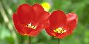 flower_pvrtc2bpp_512-256_quater-NearestNeighbor